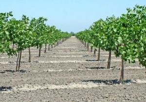 خاک های گچی و آهکی و روش های اصلاح آنها
