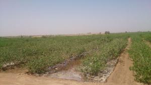 خاک های شور و سدیمی و روشهای اصلاح آن