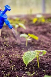 زئولیت باعث افزایش کارایی مصرف آب در گیاهان می شود.